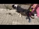 Видео от Anastasia Noy