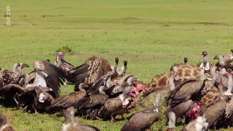 Les hyènes - Au-delà des préjugés_Arte_2021_02_19_18_59
