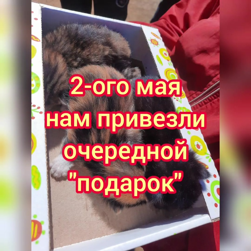 InShot_20200513_152426094.mp4