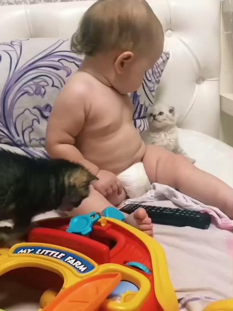 Малыш и котята