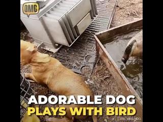 реальная лиса и собакен дружат вместе