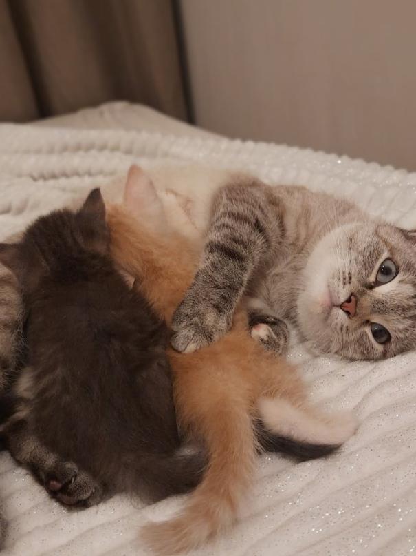 Отдам в добрые руки красивых котят, возраст 1 месяц. Серый девочка, рыжий мальчи...