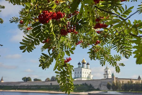 🍂 Доброе утро!🌤 Сегодня в Псковской области темпер...