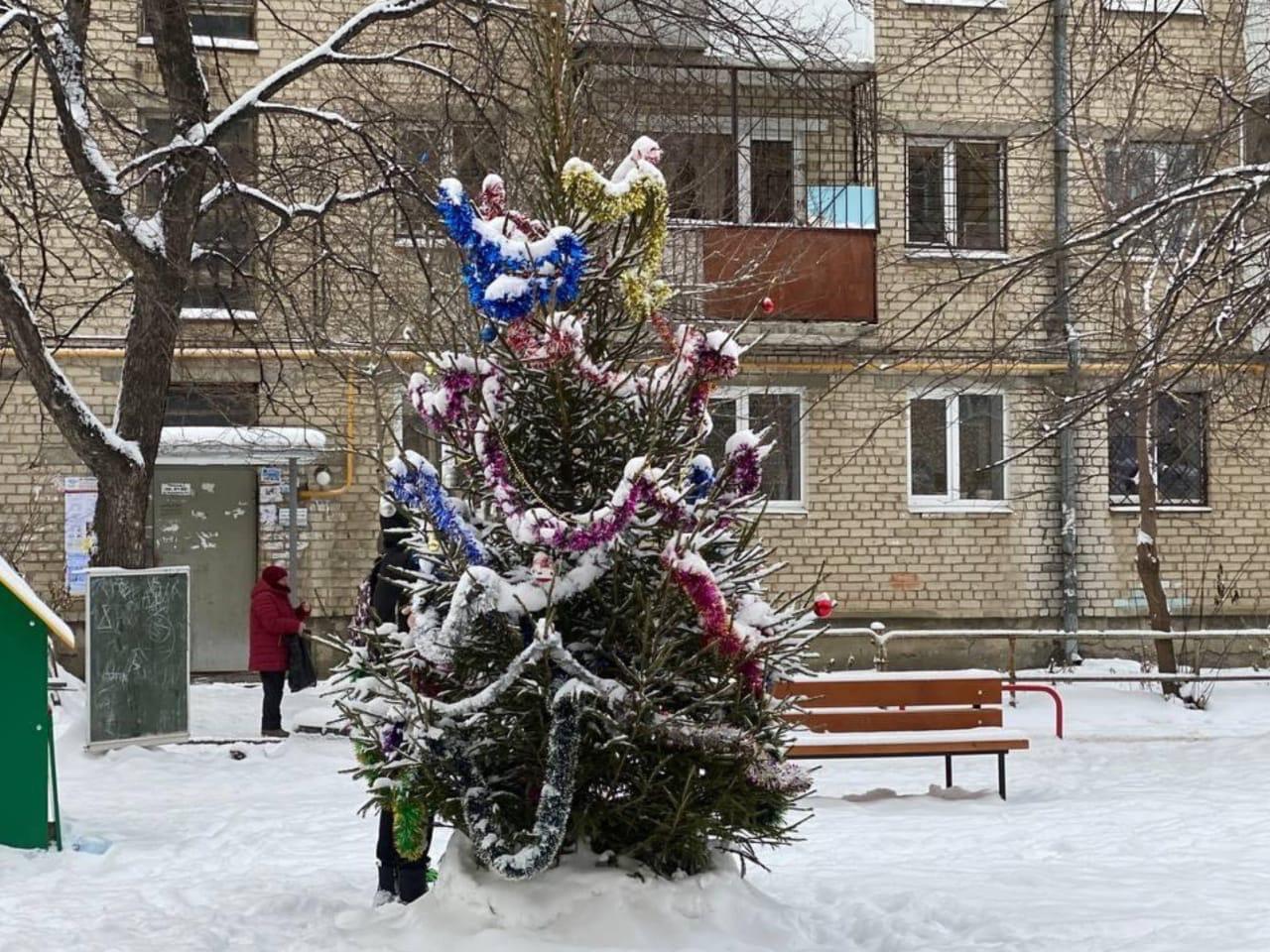 Во дворах в Орджоникидзевском районе появились живые