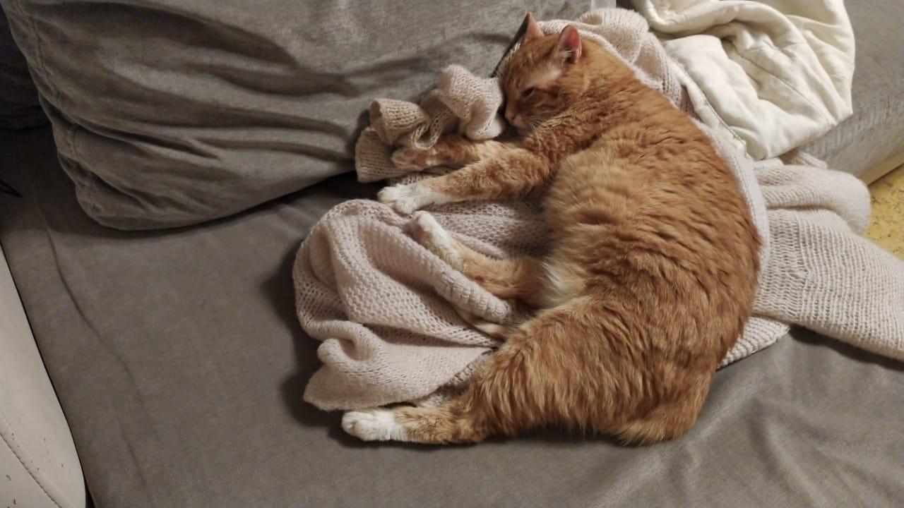 Наверное многие узнают этого котика,обитающего в 54кс.многие