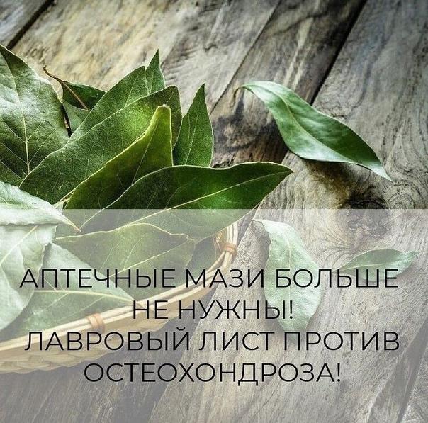 ЛАВРОВЫЙ ЛИСТ В ПОМОЩЬ