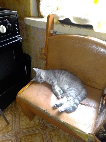 Потерялся котёнок на Белинского 27Зовут АлисаКто н...