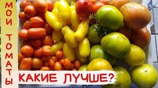 Мои ВКУСНЫЕ помидоры и огурцы из теплицы / Домашние помидоры /