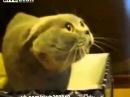 Котэ Колдует! Говорящий кот! Просто Ржач!