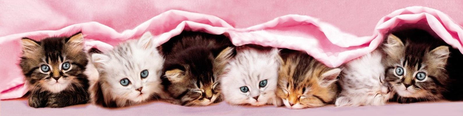 пластиковый котята картинки для обложки сожалению