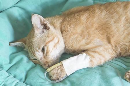 Инфекции кошек, изображение №4