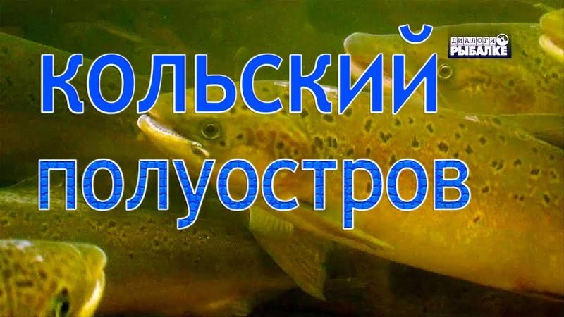 РЕКИ КОЛЬСКОГО ПОЛУОСТРОВА О чём молчат рыбы 85