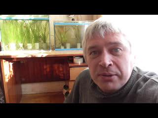 В аквариуме появились новые рыбы - второе видео