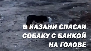 В Казани спасли собаку, которая застряла в пластиковом баллоне: она еле дышала и не ела пару дней