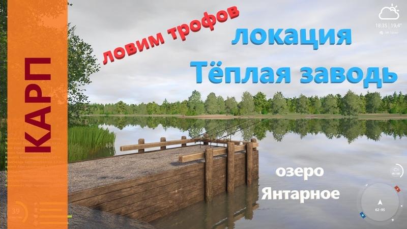 Русская рыбалка 4 озеро Янтарное Как поймать трофейного карпа Carp