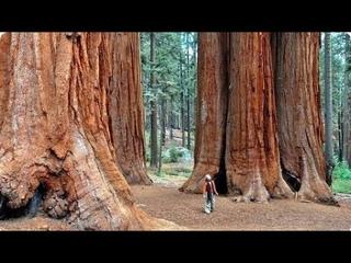 Деревья прошлого.