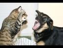 🐈 Враг или друг Ответный удар 🐈 Подборка смешных кошек и собак для хорошего настроения! 😸