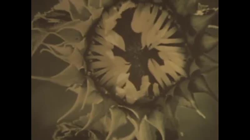 Война На западном направлении 1990 5 серия Огненный Смоленск Золотая кол