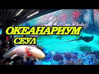 Сеул Океанариум COEX Aquarium inside the COEX Mall in Seoul, South Korea Южная Корея