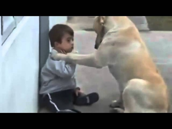 Sweet Mama Dog Interacting with a Beautiful Child with Downs S
