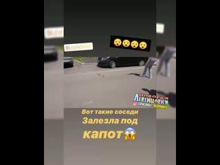 Змея залезла под капот машины -  Это Ростов на Дону!