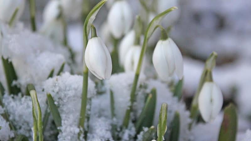 В Прикамье ожидается самая сильная оттепель за всю зиму