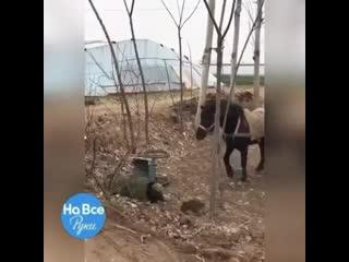 С таким конем хоть куда