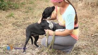 В добрые руки отличная собака Смородина!